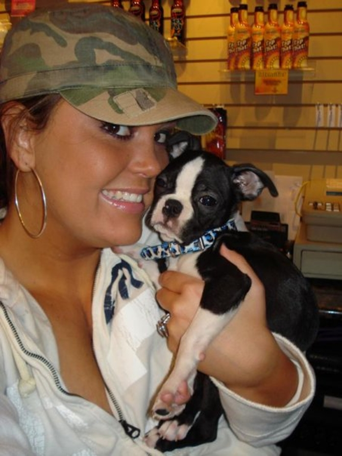 Ty - Boston Terrier Puppy For Sale Premier Pups