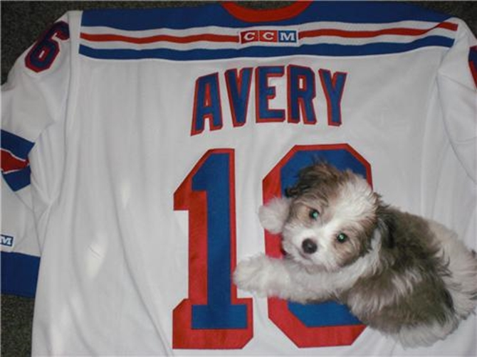 Avery - Havanese Puppy For Sale Premier Pups