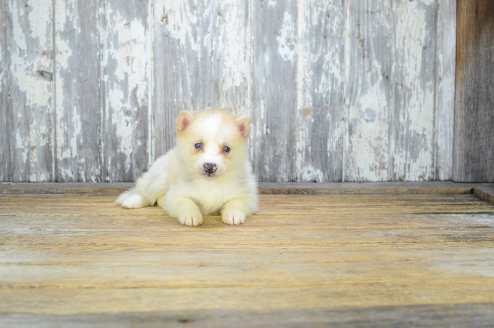 Cheap Small Dogs For Sale In Ohio
