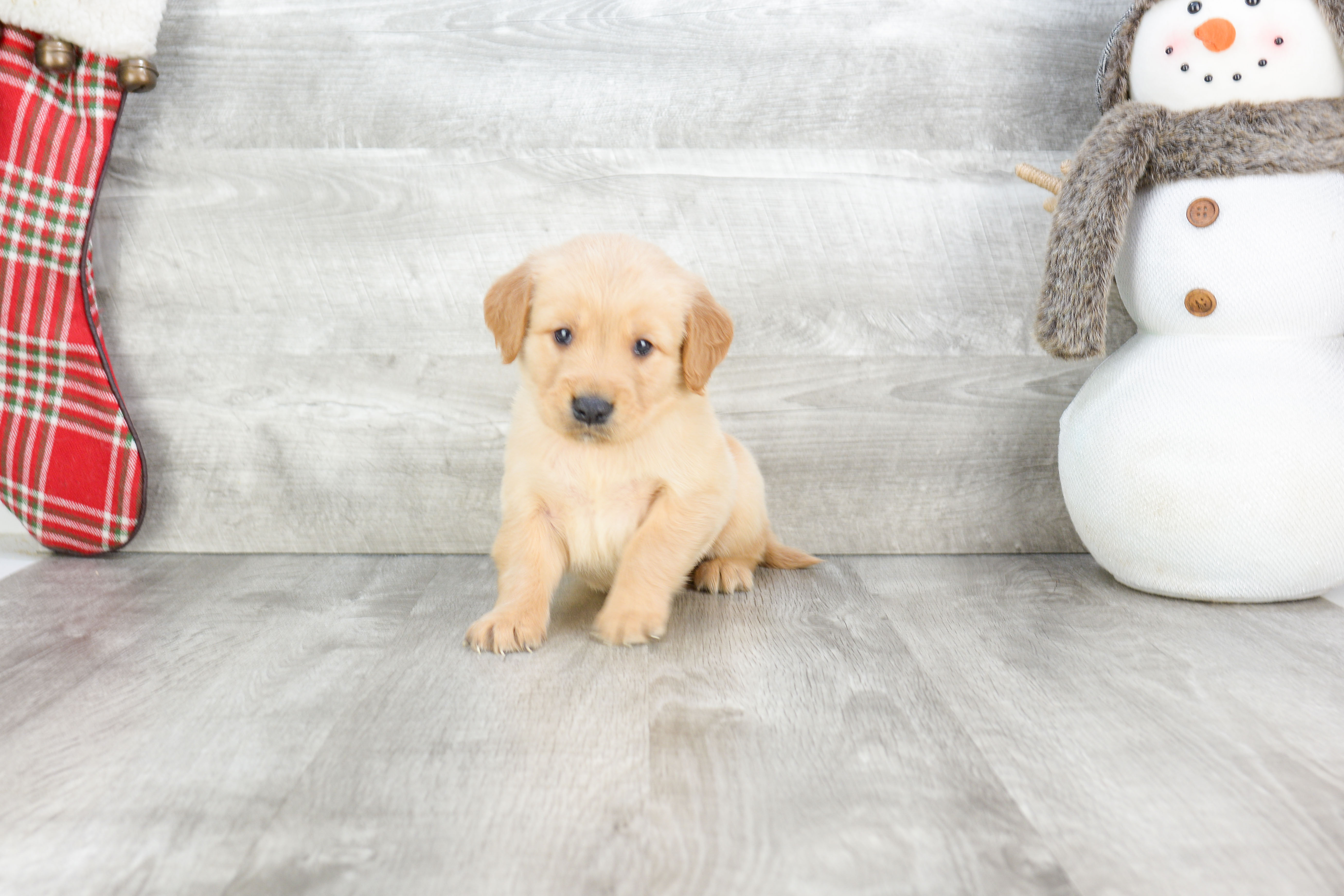 pets for sale in ohio