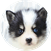 Pomsky Puppy For Sale Premier Pups