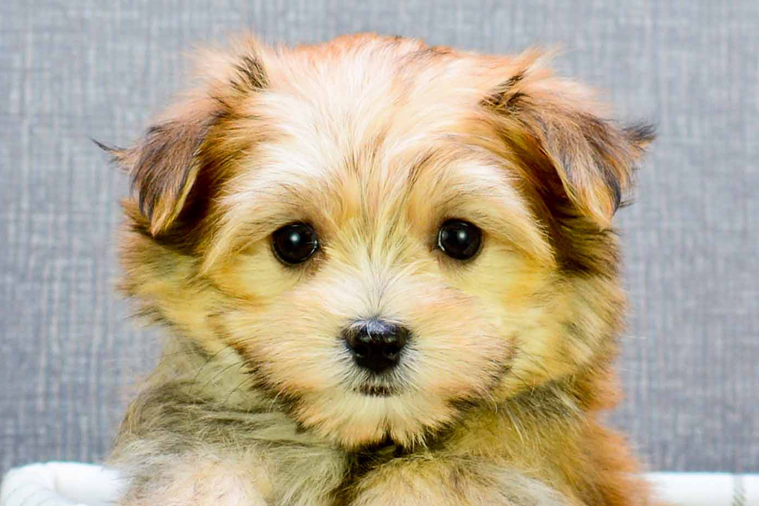 puppies Google Search