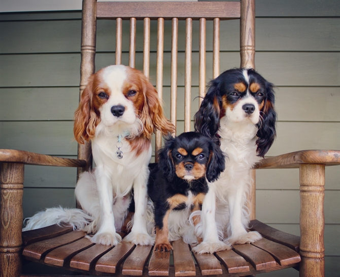 Tucker, Zoe, and Abbey