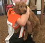 James Mini Goldendoodle puppy